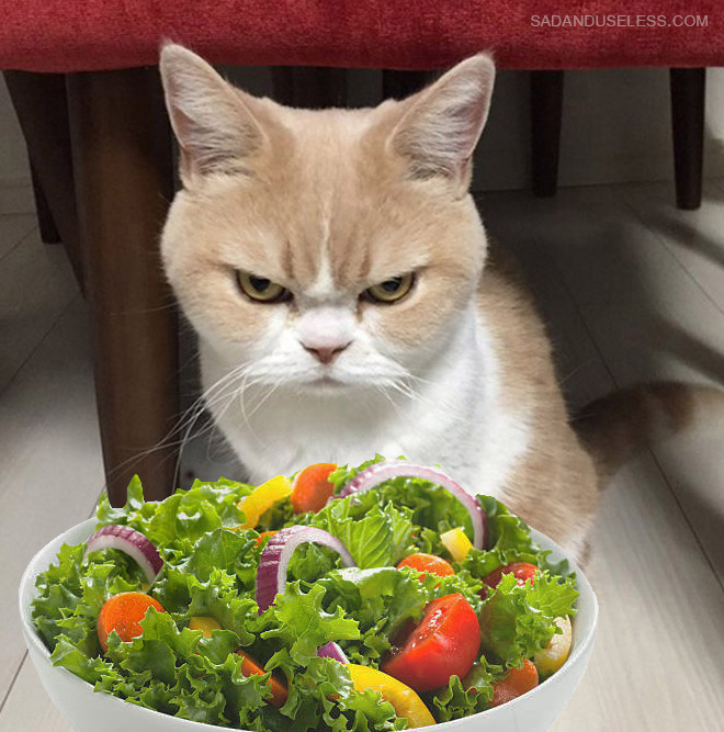 Cats hate salad.