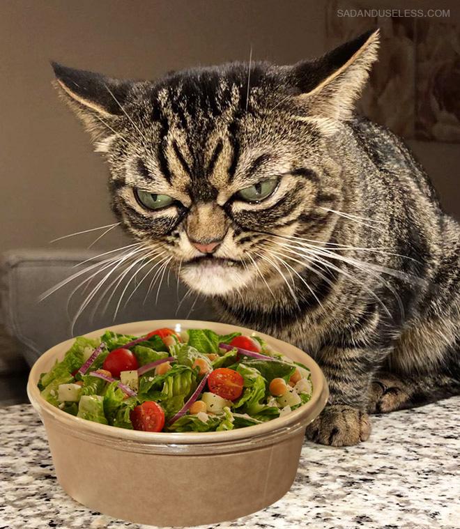 Salad?! WTF?!