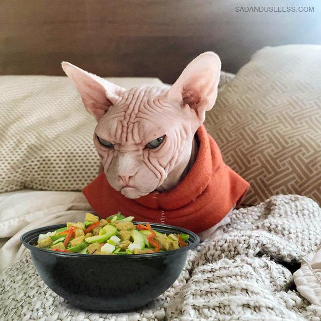 Cats despise salad.