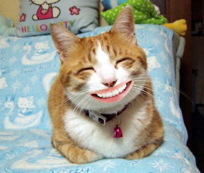 Smiling cat.