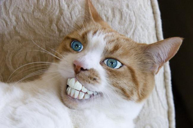 Cats with human mouths look terrifying.