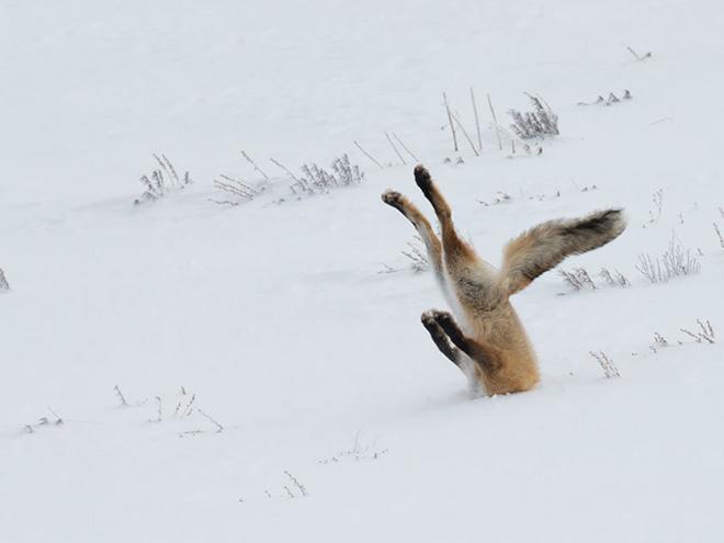 Wildlife photo fail.
