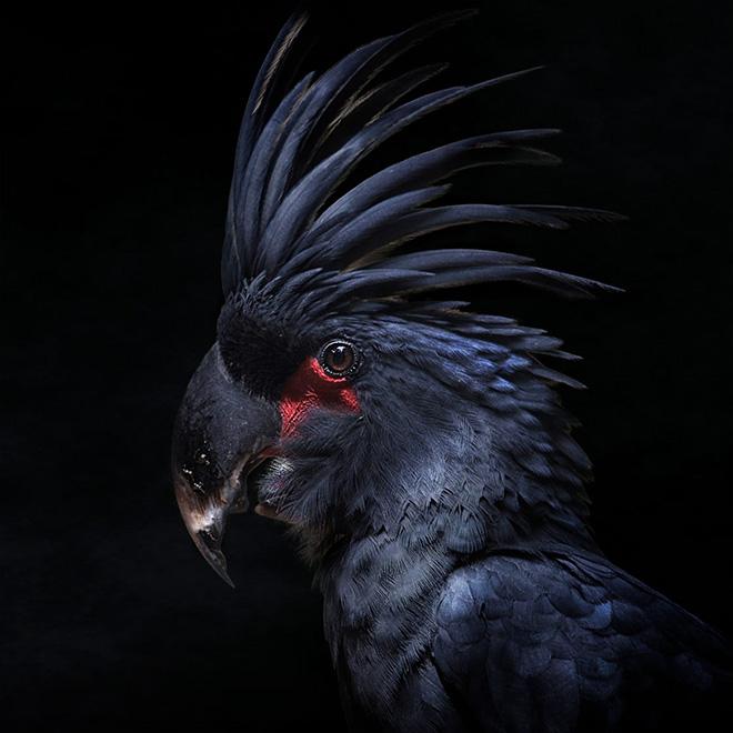 Cette créature infernale devrait fonder un groupe de heavy metal.