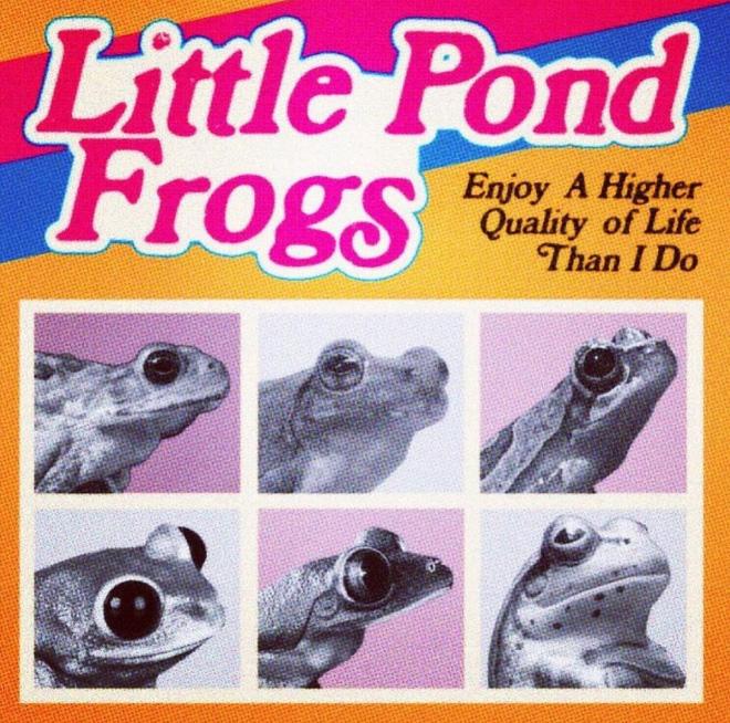 Petites grenouilles de l'étang.