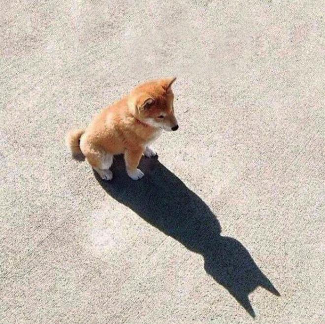 Holy crap, it's Batman!
