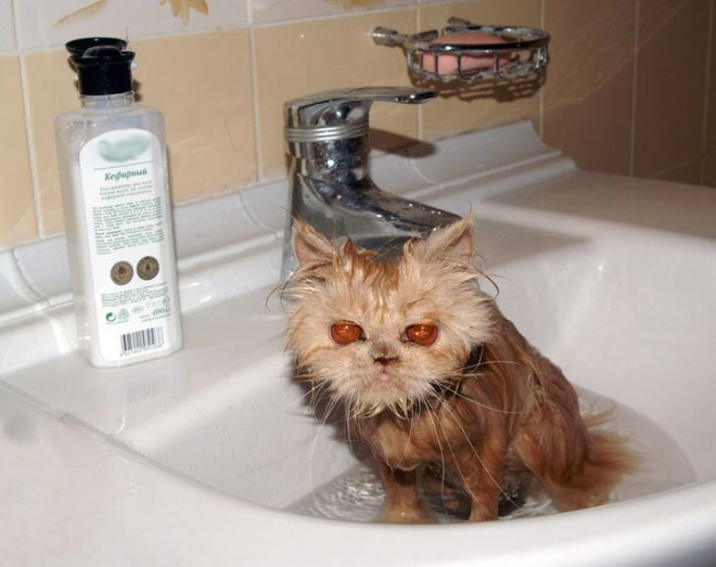 You made a terrible mistake. Your life is now in danger, human.