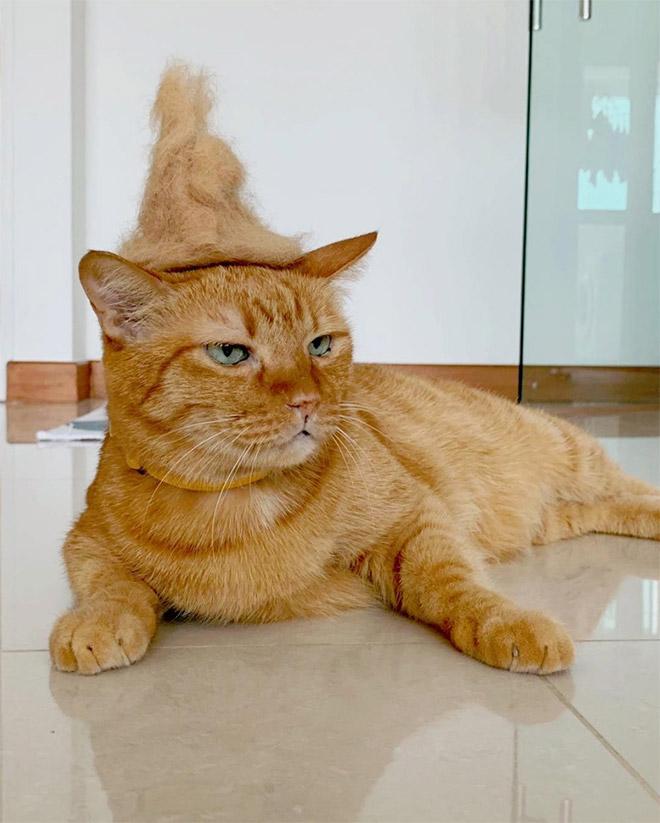 Wizard hat.