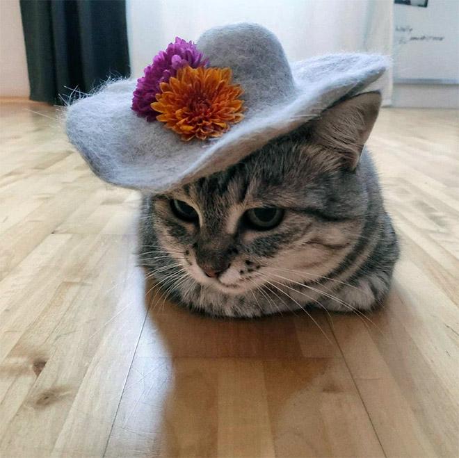 Cat fur hat.