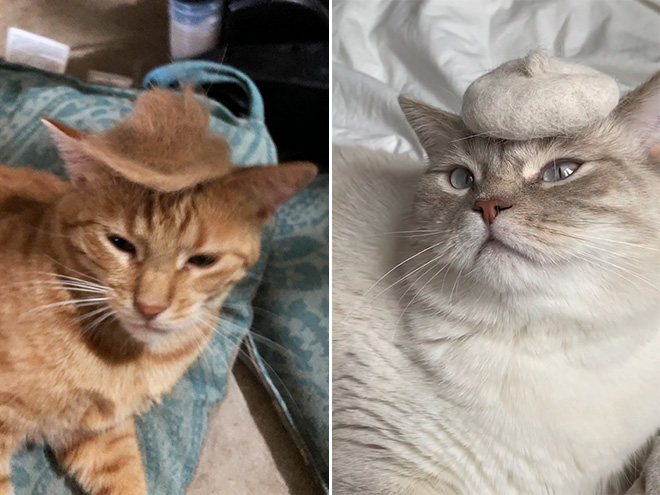 Cat hats made from their own hair are the best!