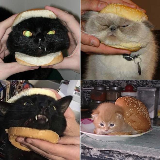 Sandwichs pour chats.