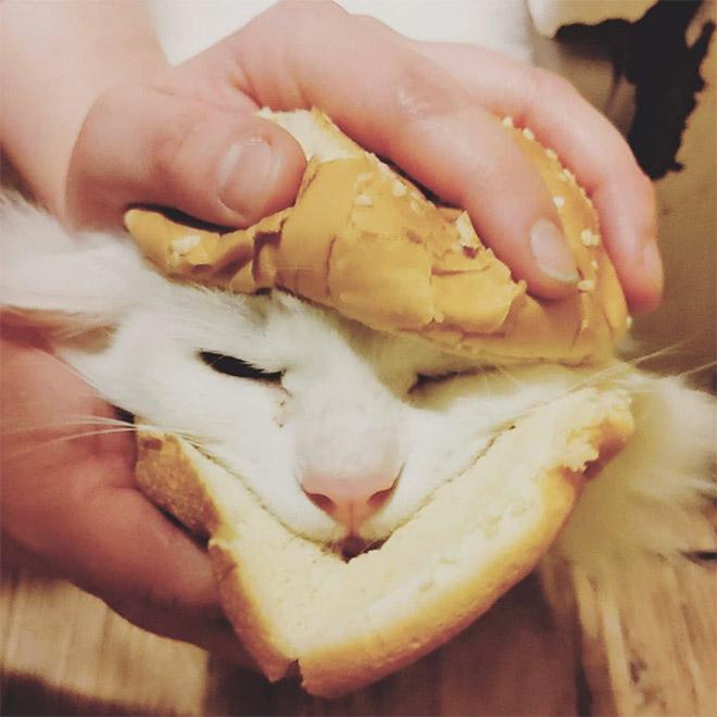 Sandwich au chat.