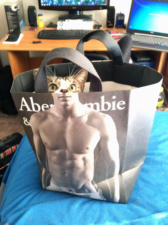 Really ripped cat.