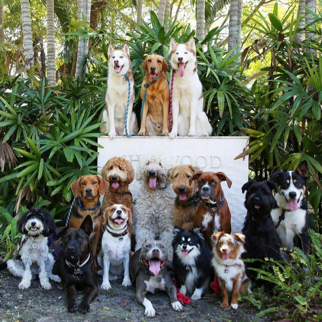 Photo de groupe de chien.
