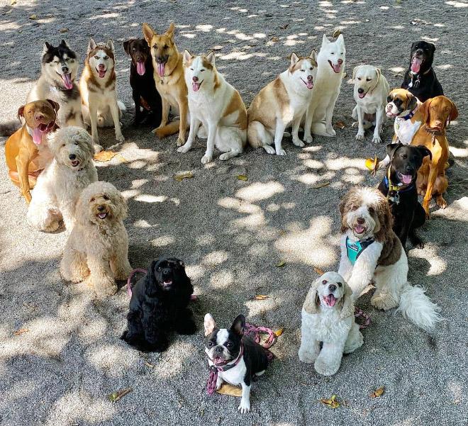 Photo de groupe de chien parfaite.