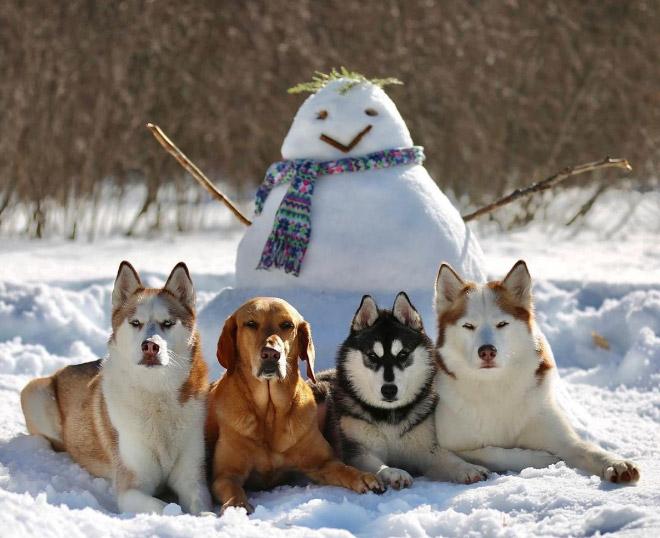 Belle photo de groupe de chien.