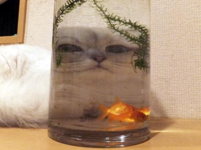 Photo déformée de verre drôle.