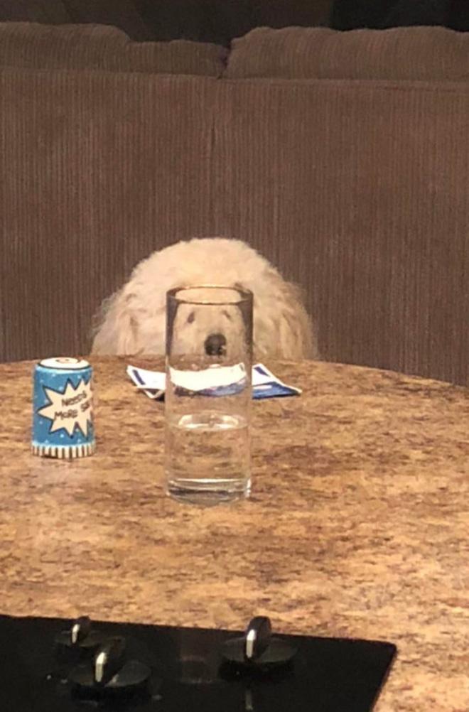 Photo de chien drôle.