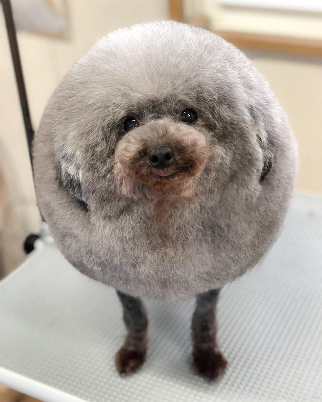 Round animals are the best animals.