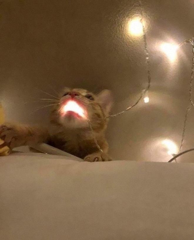 Some animals have threatening auras.