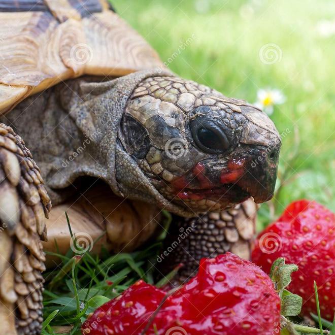 Strawberry breakfast.