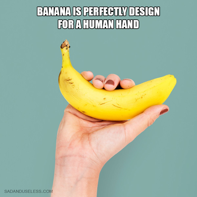 Banana is perfectly design for a human hand.