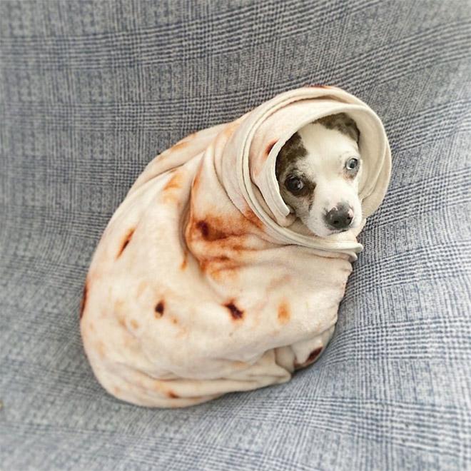 Couverture de burrito.