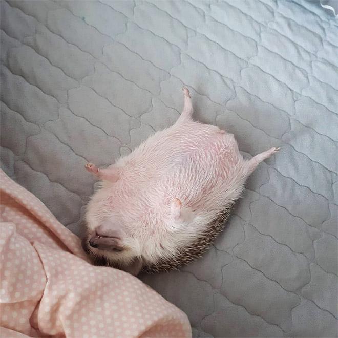 Il adore dormir comme ça.