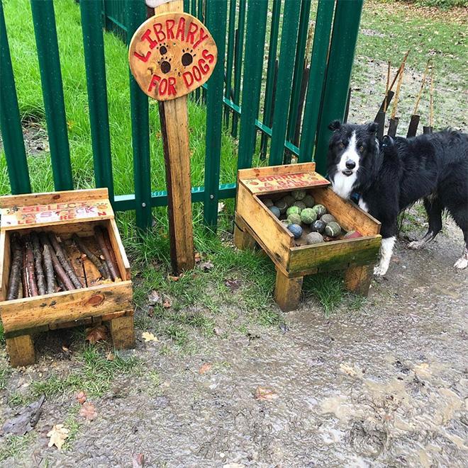 Bibliothèque pour chiens.