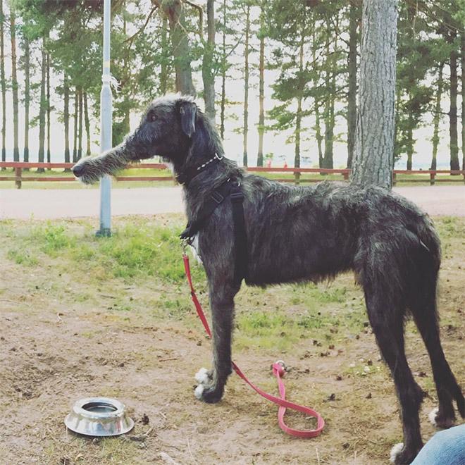 Échec de la photo panoramique du chien.