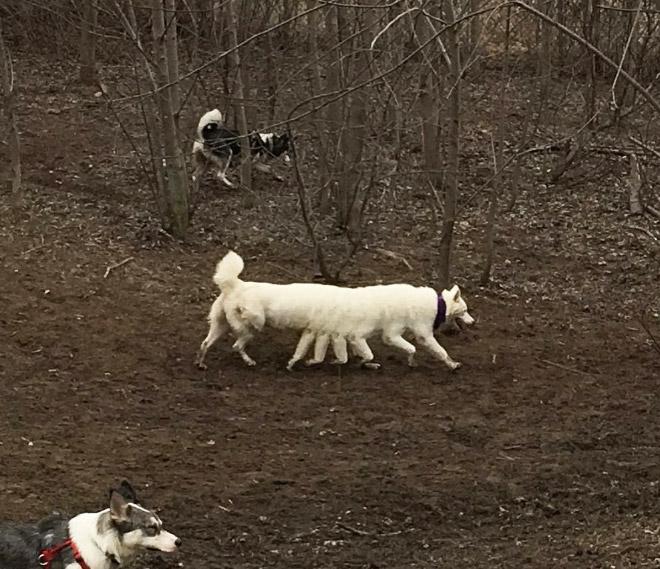 Dog panorama photo fail.