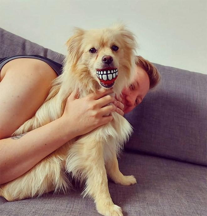 Jouet drôle de chien de boule de dents.