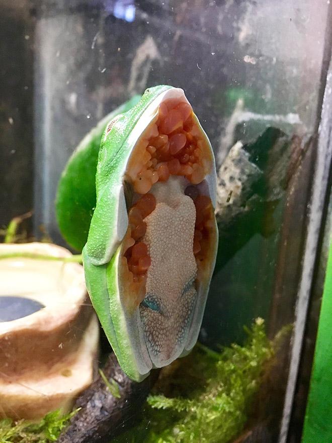 Frog on glass.