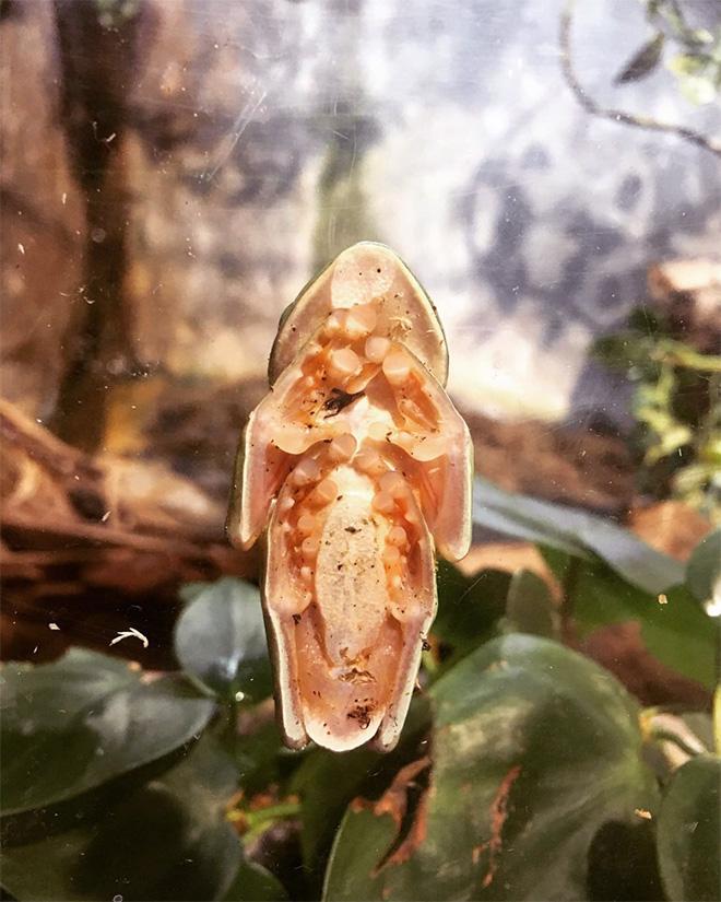Crepy frog on glass.