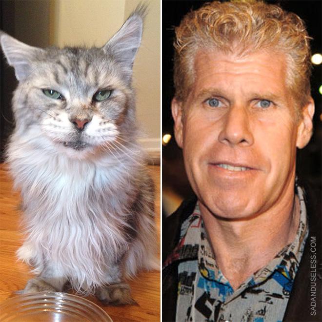 Ron Perlman cat.