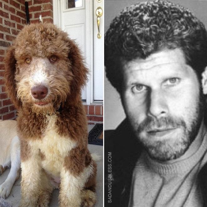 Ron Perlman dog.