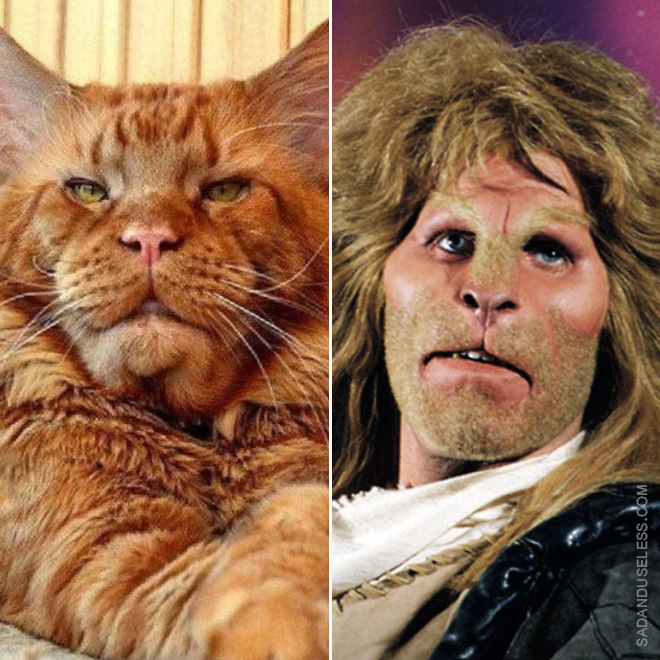 Two identical cats.