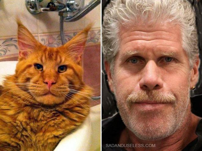 Ron Perlman cat double.
