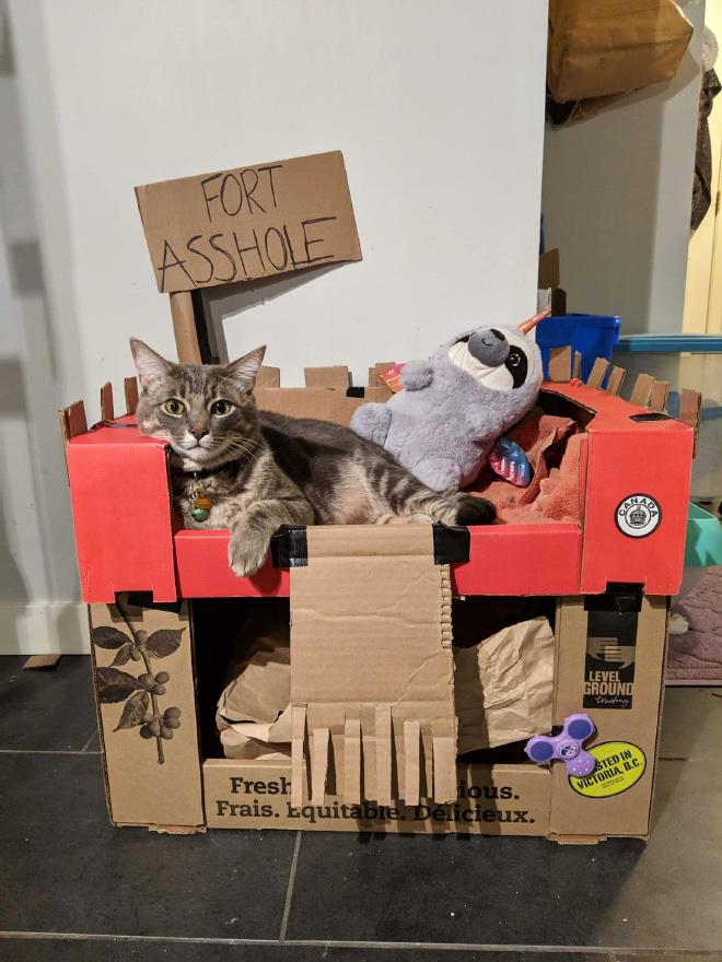 Funny cardboard cat fort.