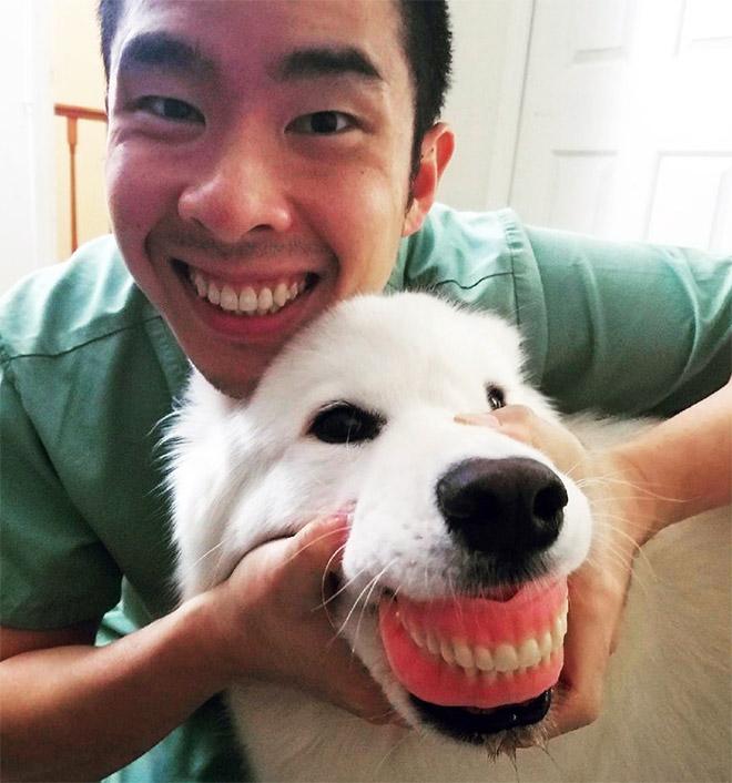 Chien portant des prothèses dentaires.