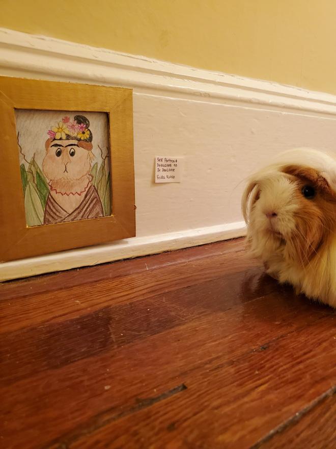 Cochon d'Inde appréciant le musée d'art de bricolage.