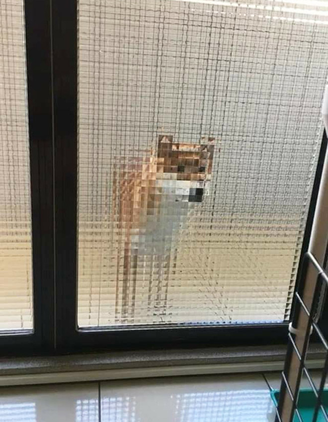 Pixelated dog behind glass doors.