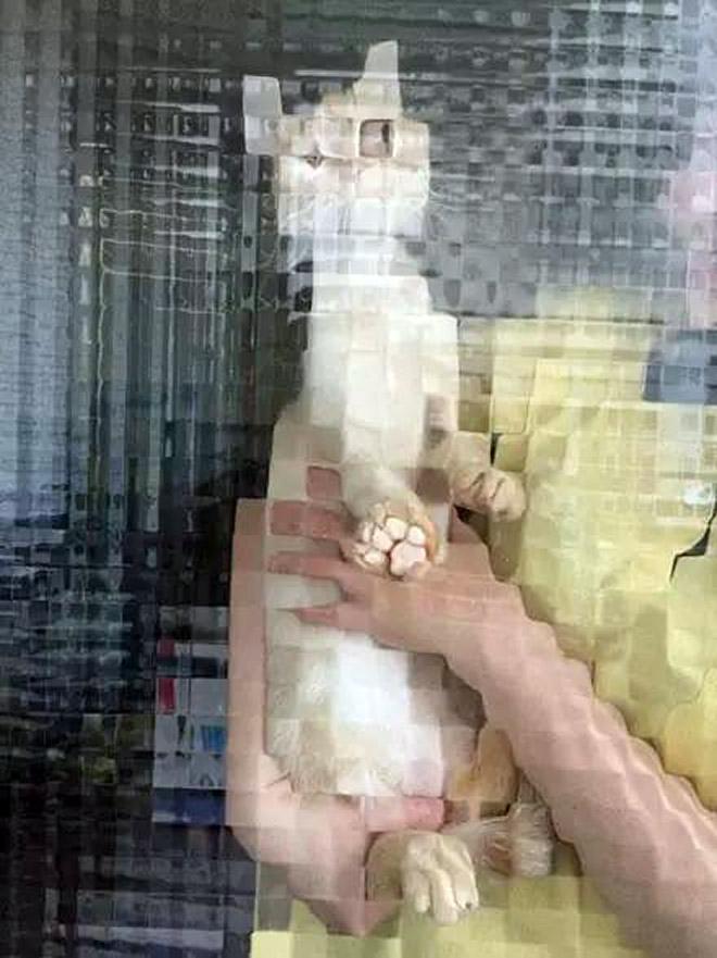Pixel cat.