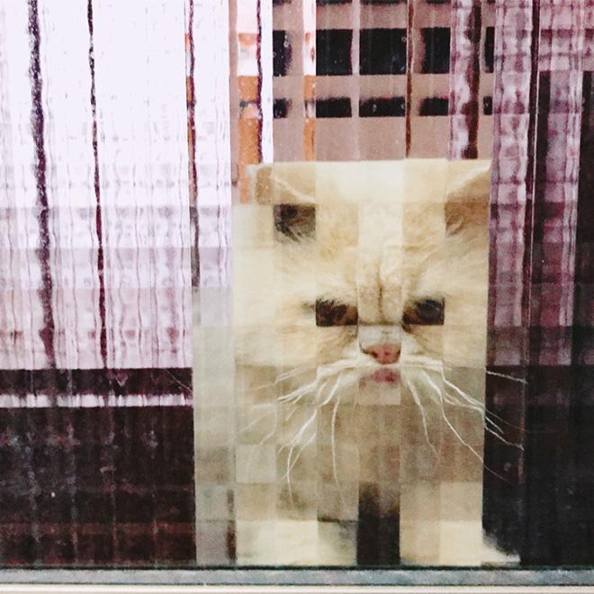 Pixelated cat behind glass doors.