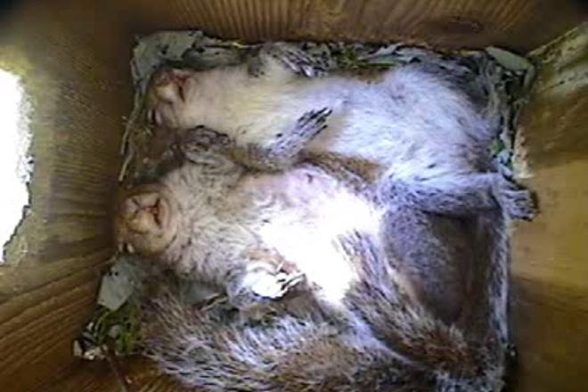 Sleeping squirrels.