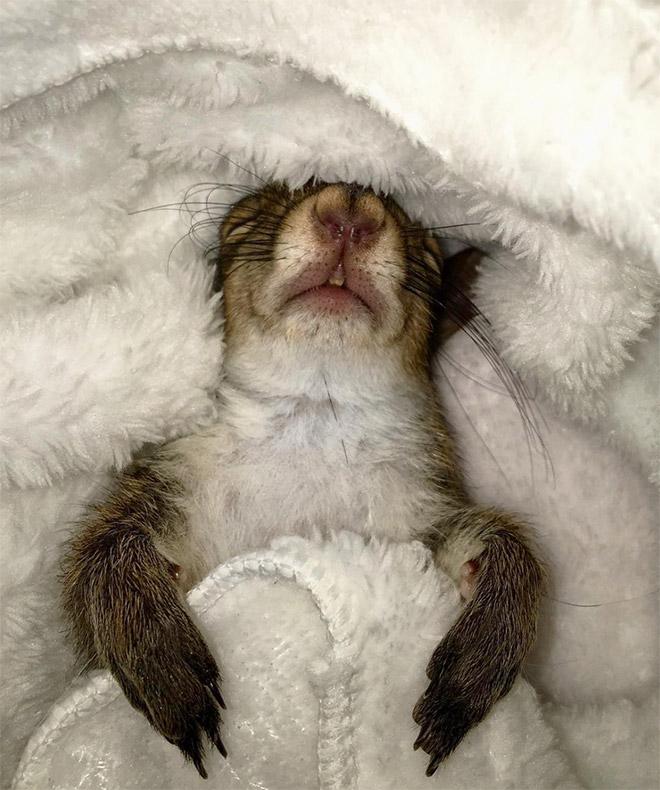 Sleeping squirrel.
