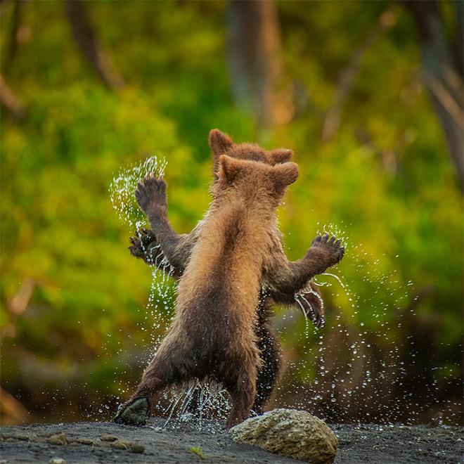 Brilliant wildlife photo.