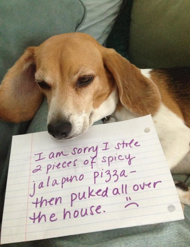 Chien honteux.