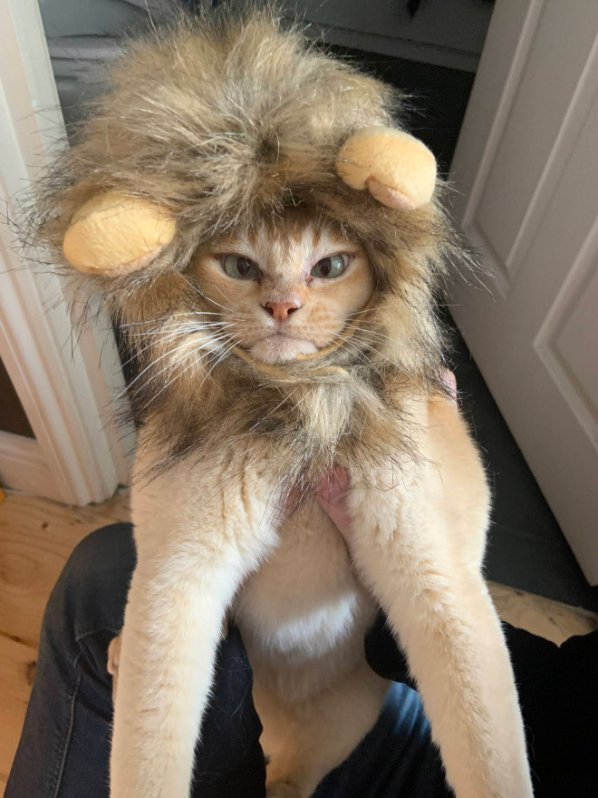 Lion mane hat for cats.